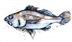 Jewfish2